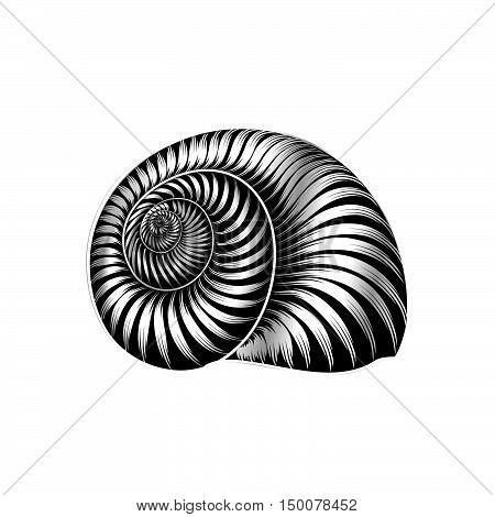Seashell ingraved vector illustration isolated on white background.
