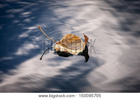 Leaf floats calmly on water. A fine art image of a yellow leaf floating in calm water.