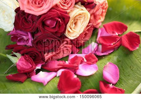 Red rose petals fall on  green  background