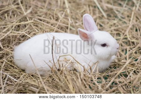 cute White rabbit in the big zoo
