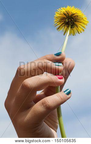 hand holding a flower over blue sky