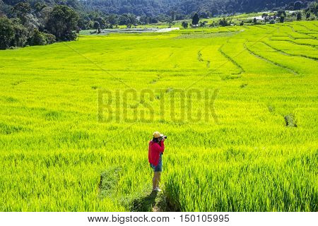 Asian women take a photo green terraced rice field in Mae Klang Luang Mae Chaem Chiang Mai Thailand