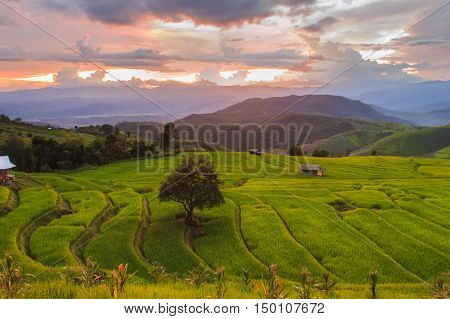 Green Terraced Rice Field in Pa Pong Pieng Mae Chaem Chiang Mai Thailand