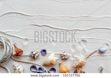 Group of Shell on the beach Summer beach.