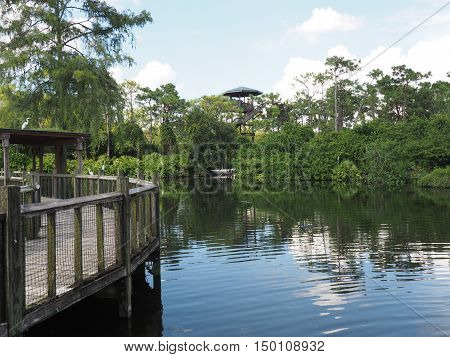 wood walkway with protective fencing near an alligator area. There are a few alligators in the water.