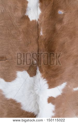 Cow skin texture in the big market