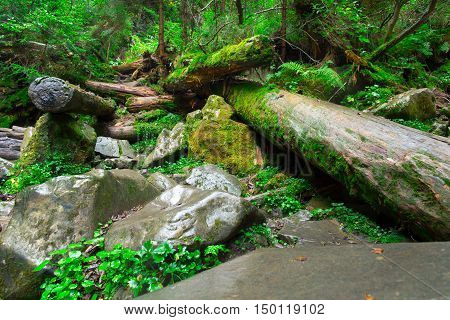 Beautiful landscape of dense woodland. Dense forest background