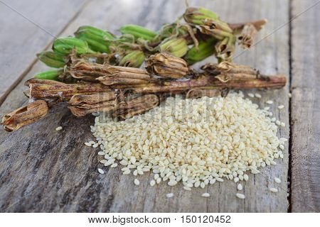 white sesame seed and sesame pods with stem on wooden table