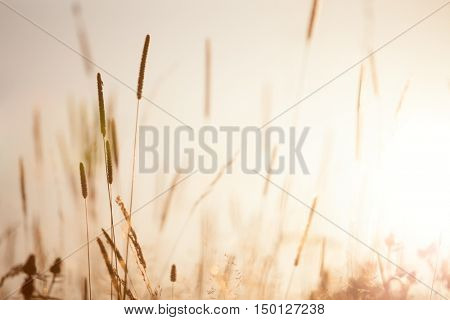 Meadow Floral nature in early sunny fresh morning - vintage soft  bokeh background,  wild flowers landscape