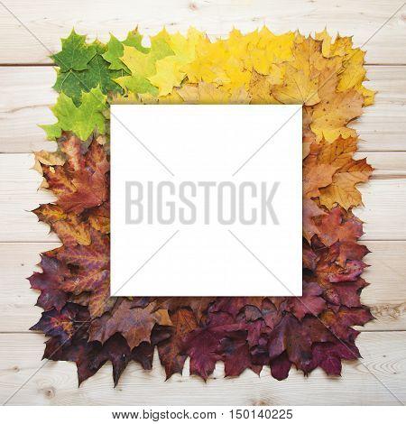Gradient Of Maple Leaves. Autumn Frame