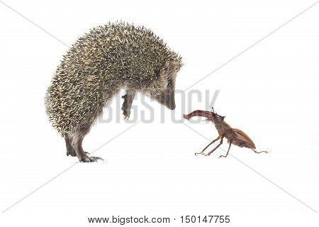 Hedgehog And Bug