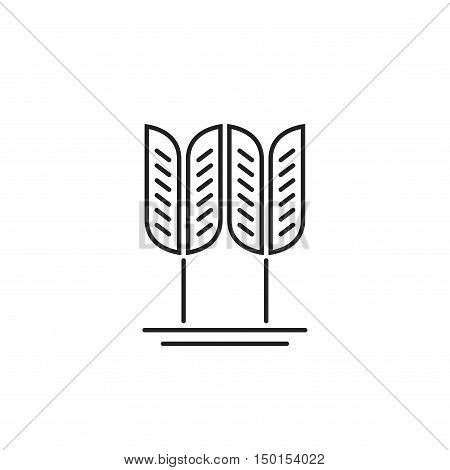 Wheat grain vector logo isolated on white background, concept of organic food label, cereal symbol, bakery symbol element, spike outline line style design