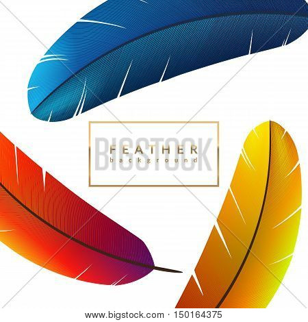 Blue feather background. Exotic bird feathers composition. Eps10 vector illustration.