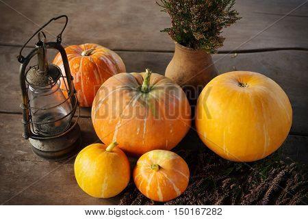 Autumn Pumpkins Thanksgiving day Background Halloween - orange pumpkins on wooden table