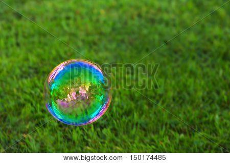 The rainbow soapbubble .Soapbubble isolated on green natural background.