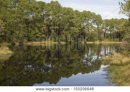 Summer landscape of river and bright trees and bushes, mirror reflections on steady river.