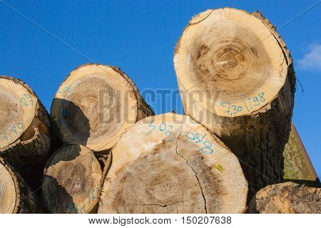 Tree Trunks Stacked Before Transformation