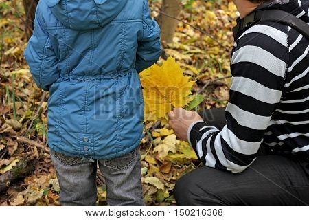 Autumn walks in the fresh air. Father and son walking through the autumnal forest. The boy is back. A man sits on his haunches sideways.