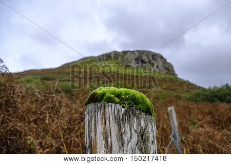 Vibrant green moss and algae growing on top of an old wooden fence post appears to form a miniature forest with the rugged peak of Cnoc Glas Heilla on the Isle of Skye Scotland in the background