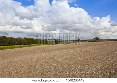 Scenic Cultivated Field