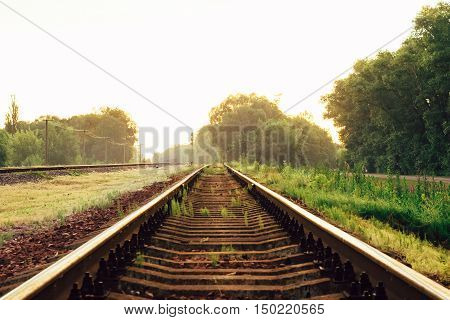 Beautiful landscape of railways among the small trees and golden sunset light