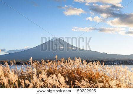 Beautiful view of Mount Fuji and field at Lake Kawaguchi in autumn season This mountain is an famous natural landmark of Japan