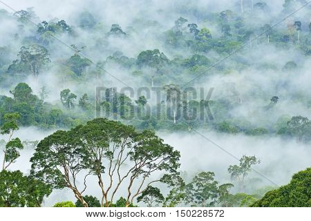 Fogs and mist over dipterocarp rain forest in Danum Valley Conservation Area in Lahad Datu Sabah Borneo Malaysia.