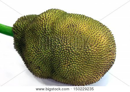 large ripe jackfruit isolated on white background