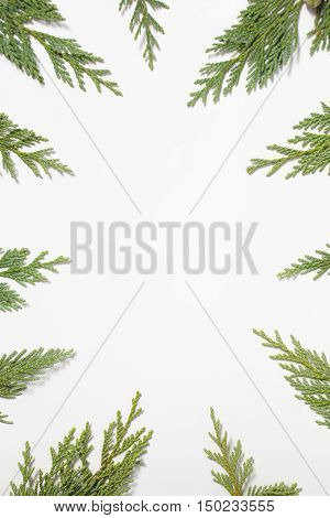 Frame with Japanese cypress (Chamaecyparis coniferous tree) leaves isolated on white background. Flat lay overhead view. Evergreen fir tree decoration for christmas card new year pattern