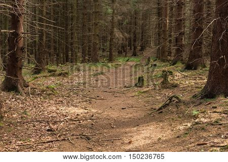 Bright green forest natural walkway in sunny day light. Sunshine forest trees. Sun through vivid green forest. Peaceful forest trees with sunlight. Forest in light. Summer forest. Green forest nature