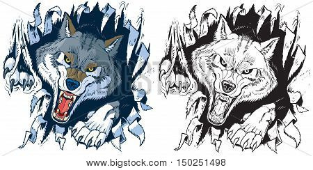 Vector cartoon clip art illustration set of an angry gray or timber wolf mascot ripping punching or tearing through a cloth or paper background in color or black and white.