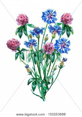 Blue cornflowers and pink clover shamrock bouquet. Watercolor hand painting illustration on isolate white background.