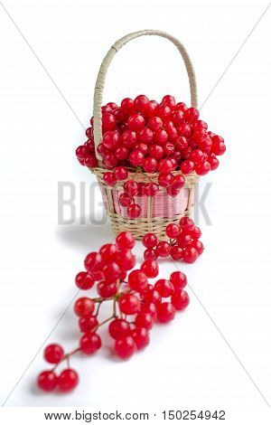 Red Berries Of Viburnum On Small Wicker Basket
