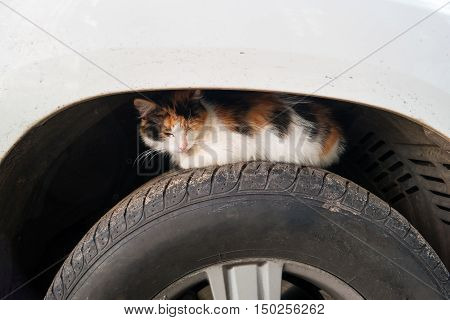 Stray cat basks on car wheel. Homeless cat hides on wheel arch of car.