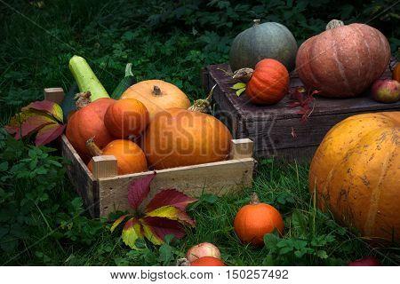 Diverse assortment of pumpkins in a wooden chest. Autumn harvest.