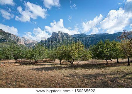 Autumn Landscape Fornalutx Mallorca