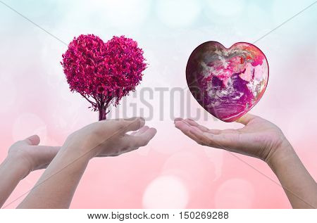 Hand holding the earth and trees that form pink heart on blurred natural background Reforestation sustainable world forest Valentine's Day Wallpaper: