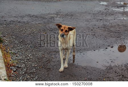 Homeless Dogs Positive Stray Dog Walking On