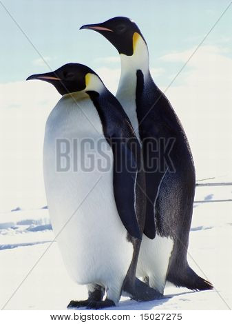 Two penguins in Antarctica