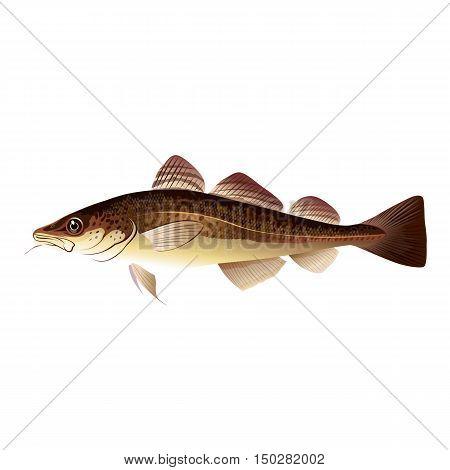 Codfish, isolated raster illustration on white background