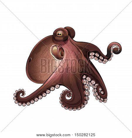 Octopus, isolated raster illustration on white background