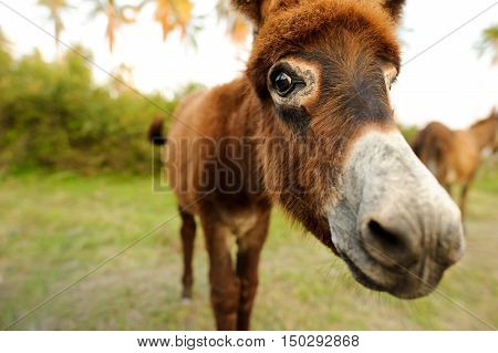Donkey is a cute funny baby donkey sticking his nose right in your face.