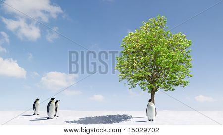 A tree growing in Antarctica