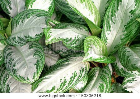 Beautiful foliage, closeup