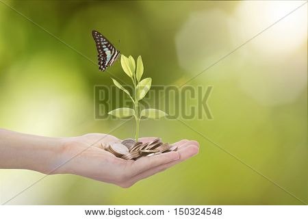hand holding money coin against tree with butterfly on green nature background. Ecological and energy money concept