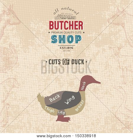 Cuts of duck. Butcher shop retro poster scheme and diagram - Farm duck. Vintage hand drawn vector Illustration