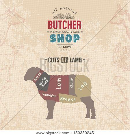 Cuts of lamb. Butcher shop retro poster scheme and diagram - Lamb. Vintage hand drawn vector Illustration