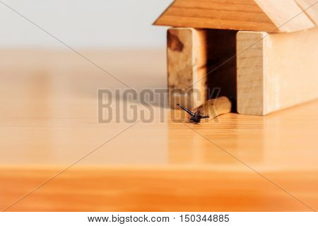 Slug In Wooden House