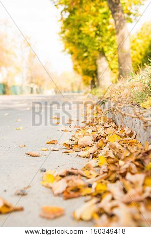 Yellow Autumn Leaves On The Pavement