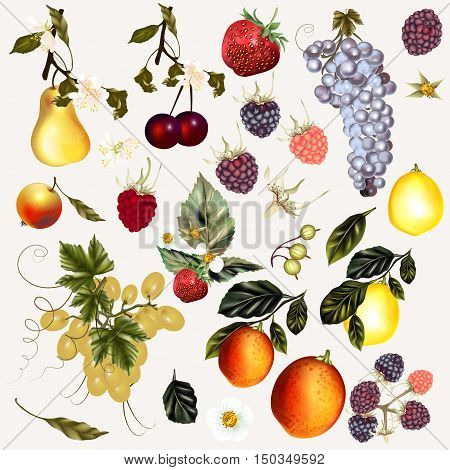 Mega collection of vector fruits and berries created in vintage style